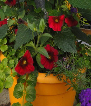 Grab and Go Planter 5563