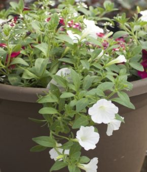 Grab and Go Planter 5441
