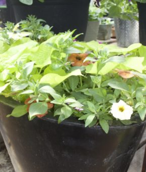 Grab and Go Planter 5463
