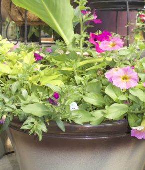 Grab and Go Planter 5474