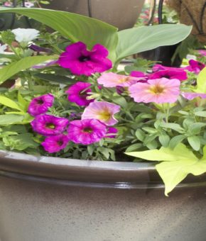 Grab and Go Planter - 5475