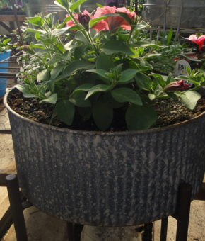 Grab and Go Planter 5555